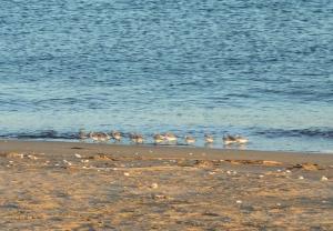 カモメのひなの集団を見つけました