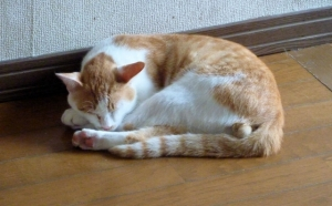 コムギ雨をさけて家の中で昼寝