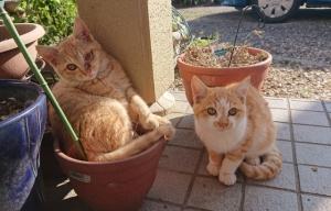 子ネコ二匹のひなたぼっこ中をおじゃましました